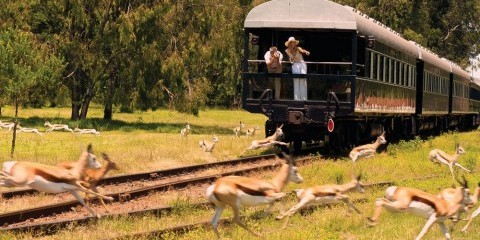 14-Day South Africa + Vic Falls Train Luxventure®