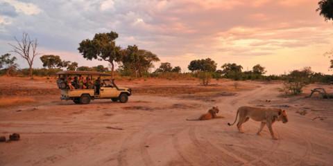 7-Day Botswana Safari Iconic