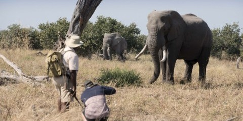 7-Day Botswana Summer Special Offer Safari