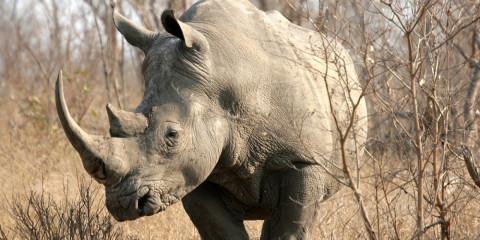 4-Day Kruger Family Safari