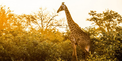 4-Day Private Kruger NP Guided Wildlife Safari Tour