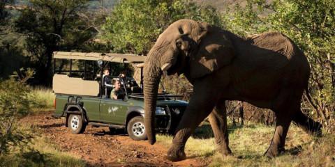 7-Day Sun City and Family Safari Experience