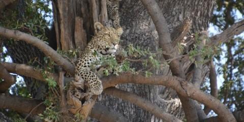 7-Day Okavango Delta & Linyanti Green Season Special