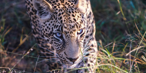 9-Day South Africa Wildlife + Winelands