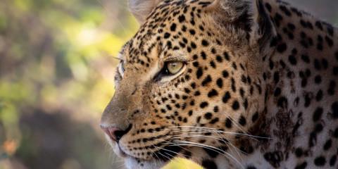 11-Day Ruaha, Katavi & Lake Tanganyika Safari