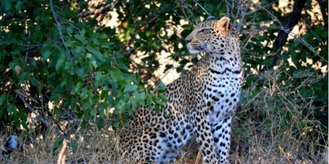 4-Day Incredible Safari Inside the Kruger Park