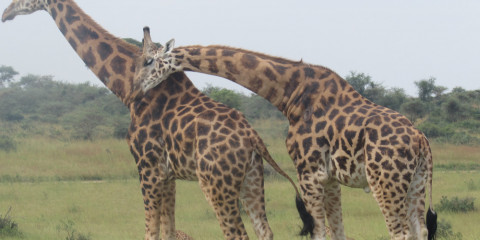 3-Day Murchison Falls National Park-Group Budget Safari