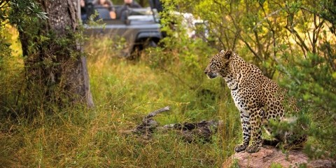 8-Day Idyllic Cape Town & Kruger