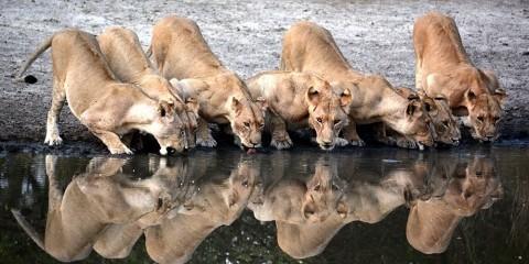 7-Day Best of Northern Tanzania Safari Tour