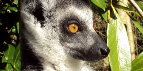 23 Madagascar Tours Amp Safaris Offered By 8 Tour Operators