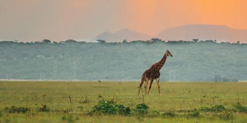 7-Day Madikwe + Sun City Safari