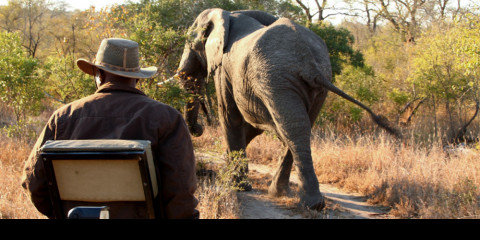 27 Malawi Safari Tours (Offered by 10 Tour Operators)