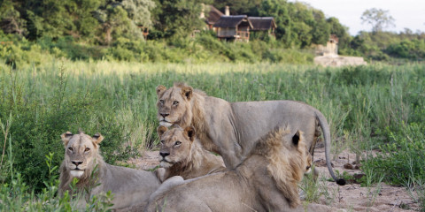 4-Day Fly-in Self-Drive Kruger Safari Tour