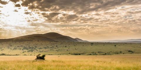 4-Day Fly-in Safari Masai Mara - Exclusive