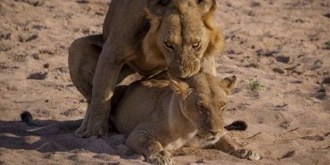10-Day Best of Tanzania; North & South