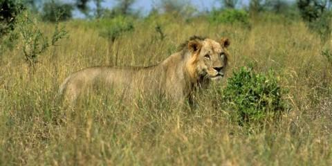3-Day Meru National Park Safari