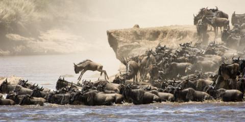 8-Day Migration Lodge Safari (North Serengeti)