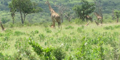 3-Day Mid-Range Drive in Safari to Mkomanzi National P