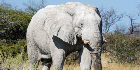 3-Day Namibia - Etosha Camping Group Tour