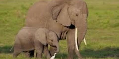 8-Day Kenya & Tanzania Wildlife Expedition