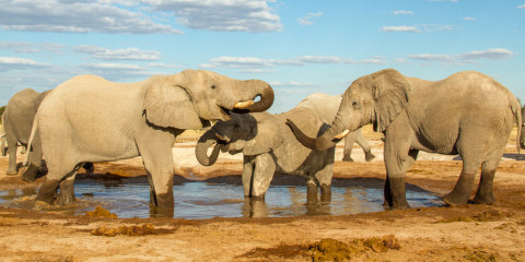 9-Day Botswana Luxventure®: Walk + Ride Safari