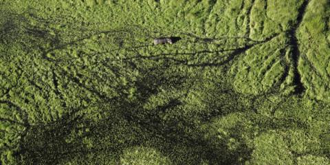 6-Day Okavango Delta + Chobe Luxventure® Safari
