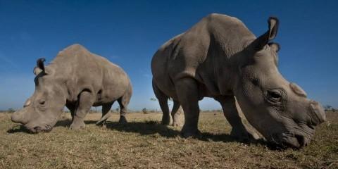 2-Day Ol Pejeta Wildlife Conservancy Safari