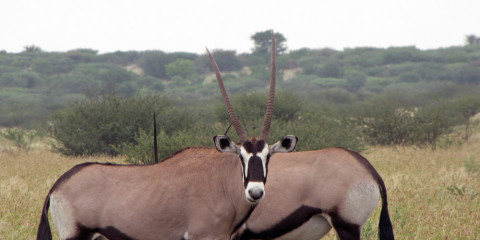 7-Day Kalahari Safari