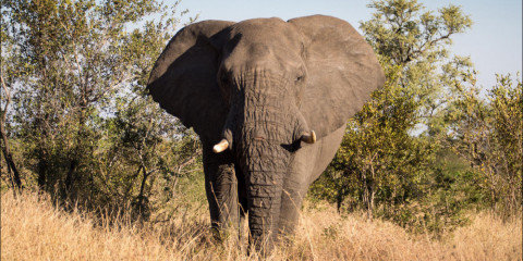 6-Day Cape Town & Greater Kruger Park Combo
