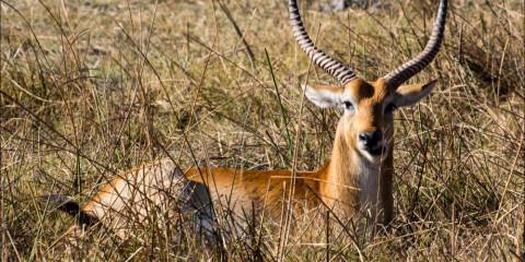 6-Day Botswana Mobile Camping + Livingstone Low Season