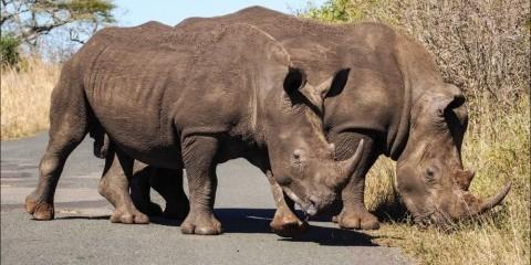 6-Day Kwazulu Natal Hluhluwe Safari & Ghost Mountain