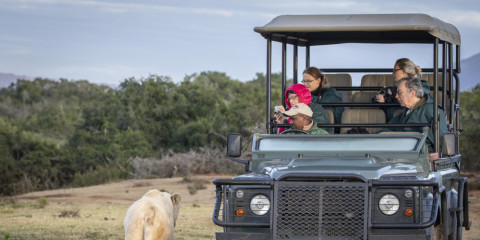 4-Day Pumba Game Reserve - See the White Lion