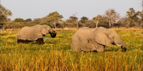 3-Day Chobe Safari with Chobe Bush or Safari Lodge