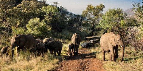10-Day South Africa Family Vacation Including Safari