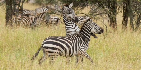 5-Day Best Deal Tanzania Complete Northern Circuit