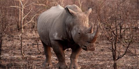 6-Day South Africa Rhino Walking Safari
