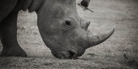 5-Day Kenya Rhino Highlights Safari Special