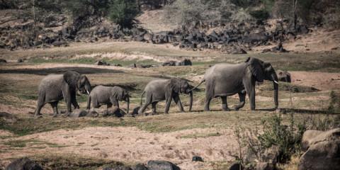 4-Day Fly-in Safari Ruaha NP - Exclusive