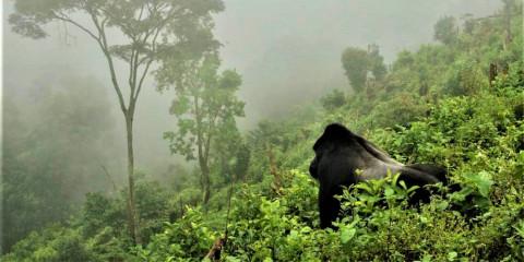 11-Day Adventures in Rwanda and Uganda Tour