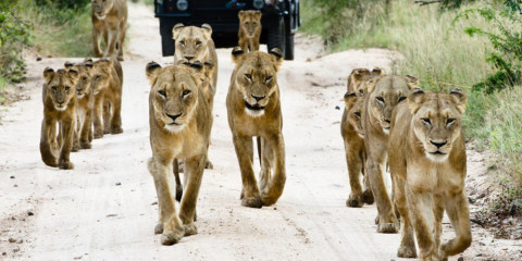 11-Day South Africa Family Luxury Safari