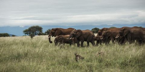 7-Day Zimbabwe Safari Experience