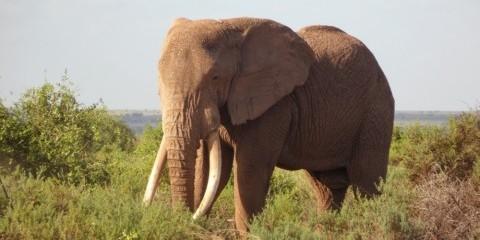 2-Day Amboseli National Park Safari & Kilimanjaro Views