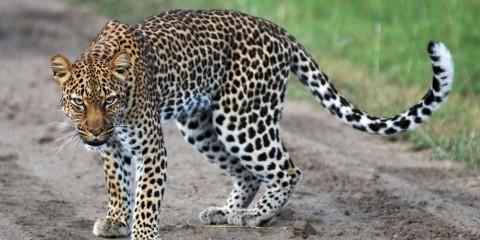 13-Day Uganda Fly-in Safari