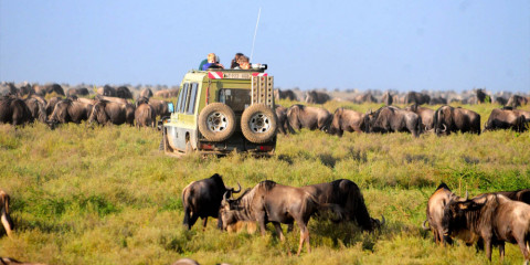 6-Day Majestic Safari in Tanzania