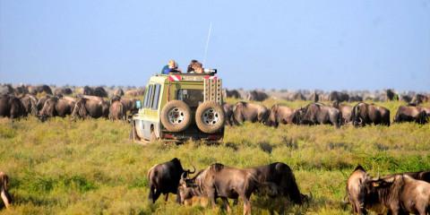 3-Day Taste of Wildlife Lodge Safari in Tanzania