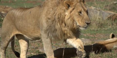 4-Day Masai Mara Kenya Big Five & Migration Safari