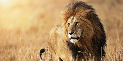 8-Day Simba Safari