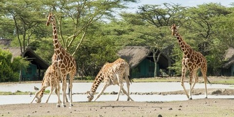 11-Day Rwanda Gorillas, Kenya and Maasai Mara