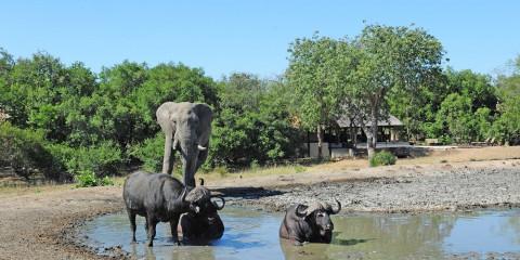 4-Day Tangala Safari Camp - Greater Kruger
