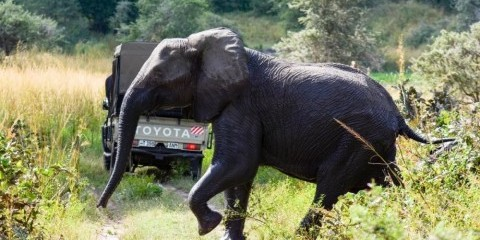 3-Day Masai Mara Low-Key Safari